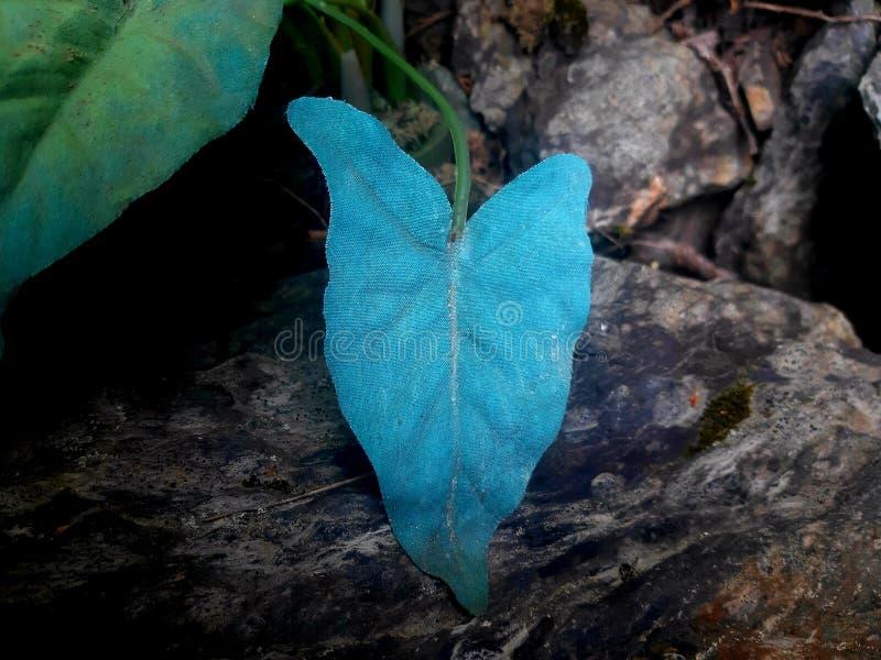 蓝色叶子丝毫一块灰色石头作为背景 库存图片