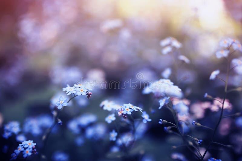蓝色和桃红色各种各样的树荫精美勿忘草花得到了疲乏在春天晴朗的庭院 免版税库存照片