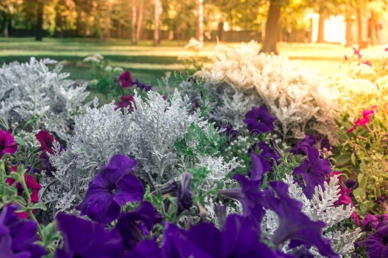 蓝色和白花在一个晴天 库存图片