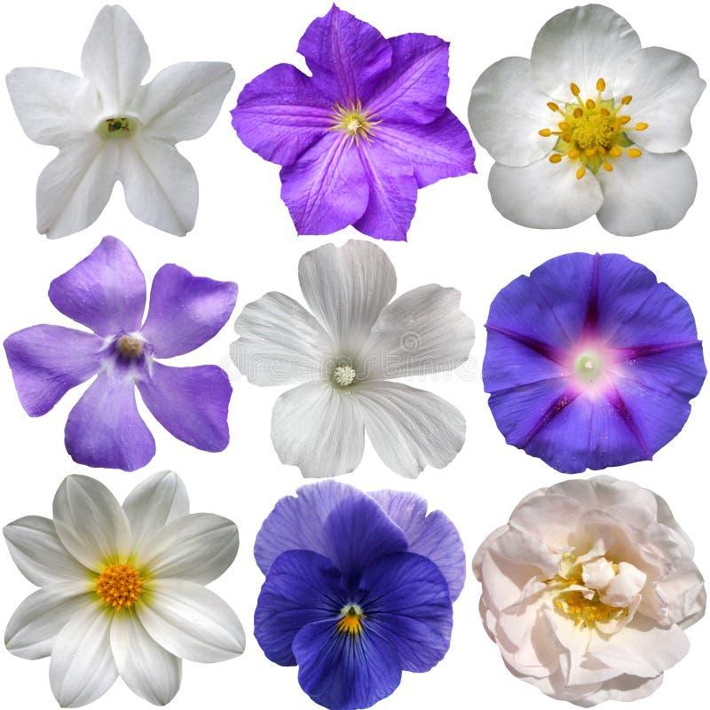 蓝色和白花 库存图片