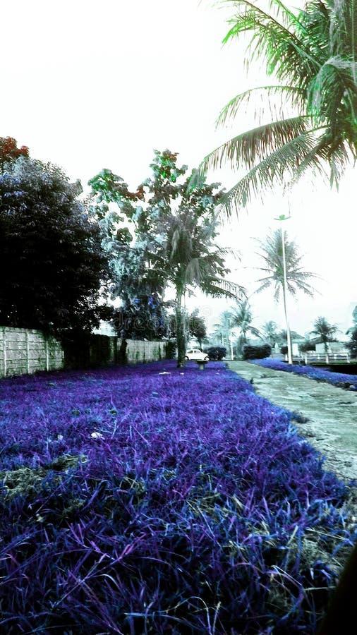 蓝色和紫色 库存照片