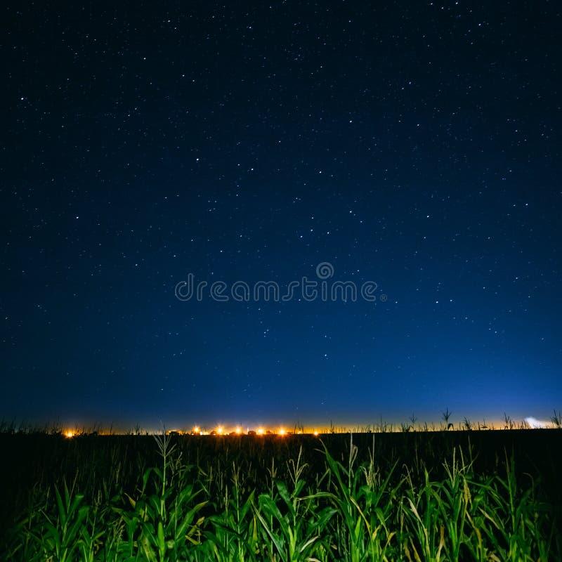 蓝色在绿色玉米田和黄色城市光上的夜满天星斗的天空 库存图片