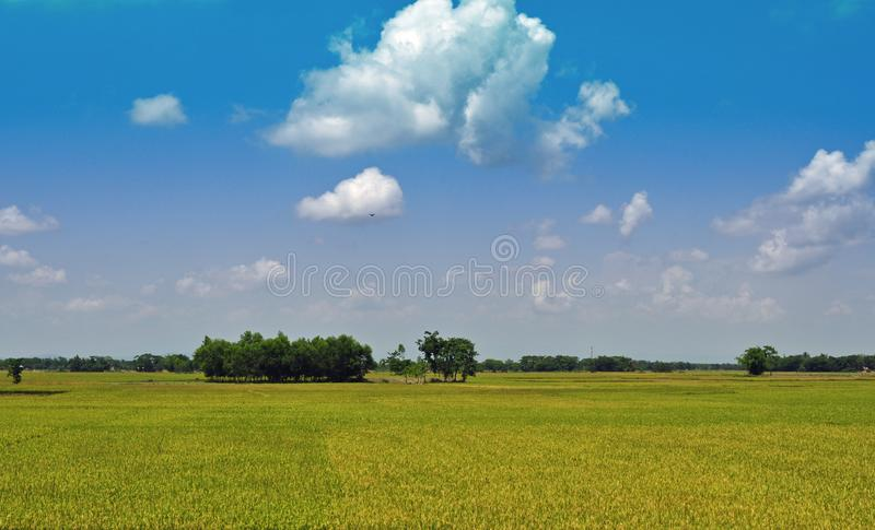 蓝色域稻天空 免版税库存照片