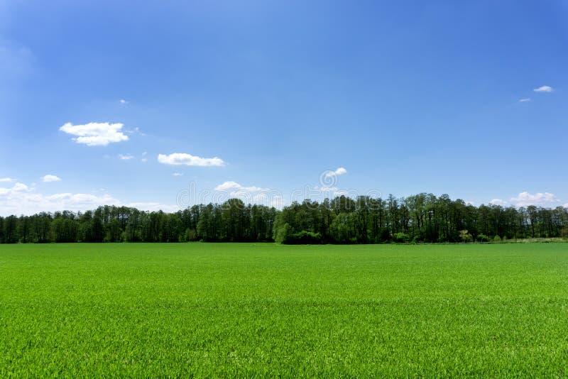 蓝色域绿色天空 免版税库存图片