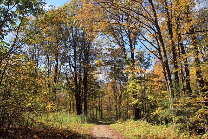 蓝色多云秋天域横向偏僻的天空结构树黄色 免版税库存图片