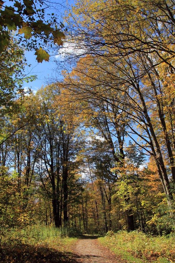 蓝色多云秋天域横向偏僻的天空结构树黄色 库存图片
