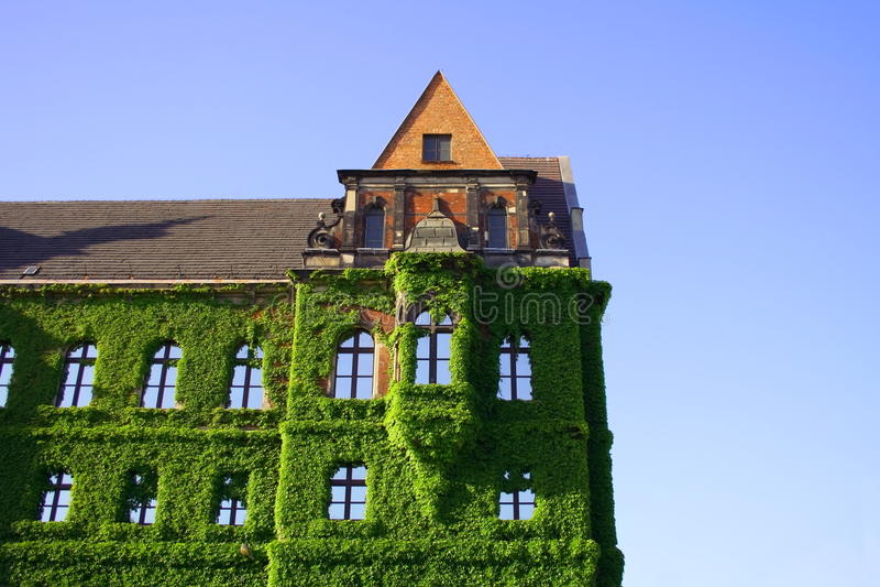 蓝色大厦包括在天空的花常春藤 免版税库存照片