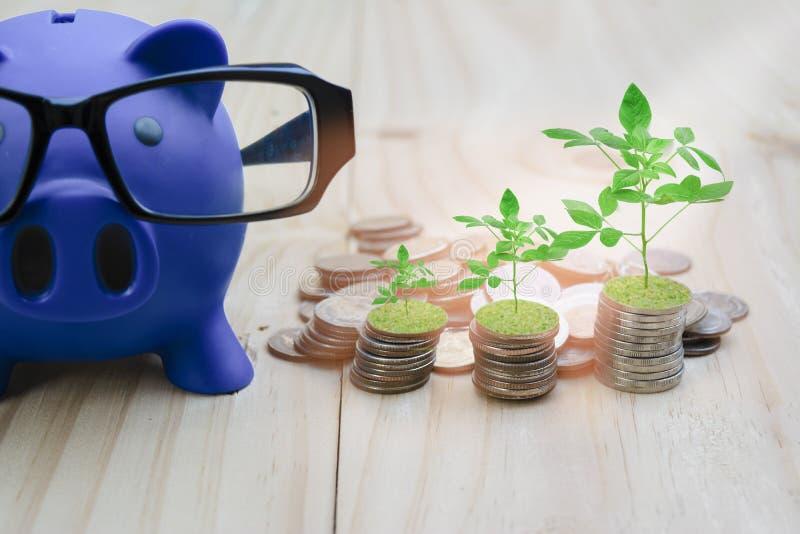 蓝色存钱罐在一个木地板被安置充满硬币 并且生长树,与保存和投资的概念为 免版税库存图片