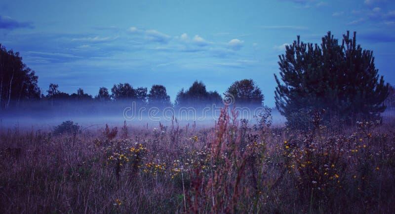 蓝色季节蓝色有雾的早晨 免版税库存照片