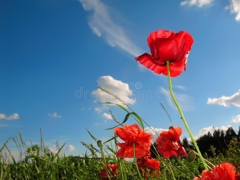 蓝色开花红色天空 库存照片