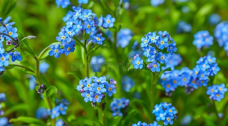 蓝色开花背景 库存照片