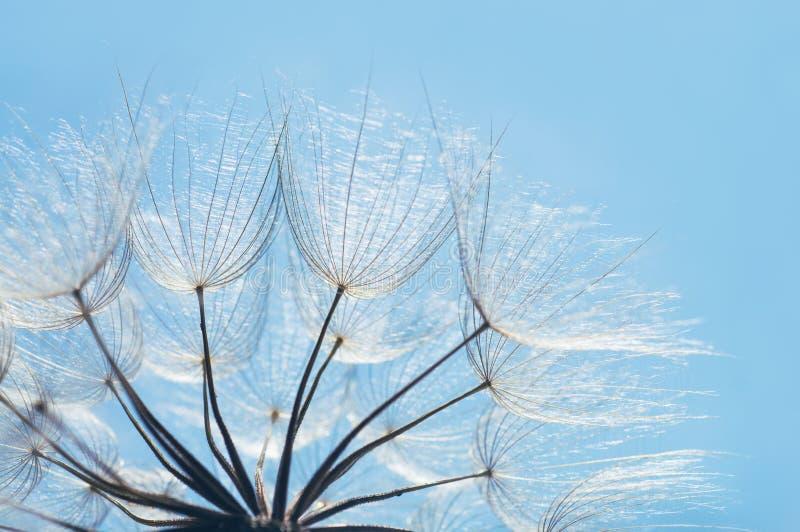 蓝色抽象蒲公英花背景,与软的焦点的特写镜头 免版税库存图片