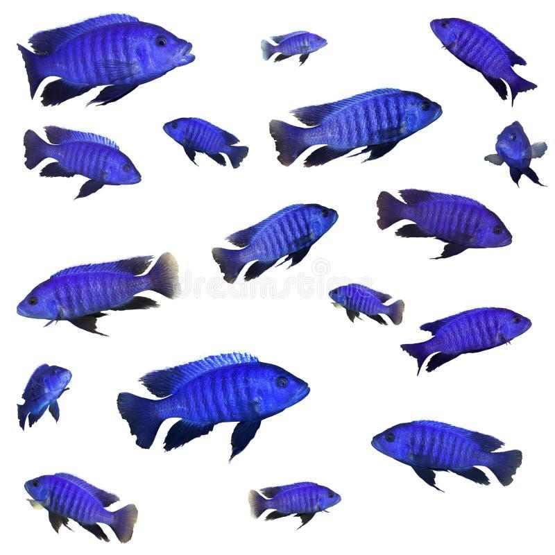 蓝色拼贴画鱼 库存照片