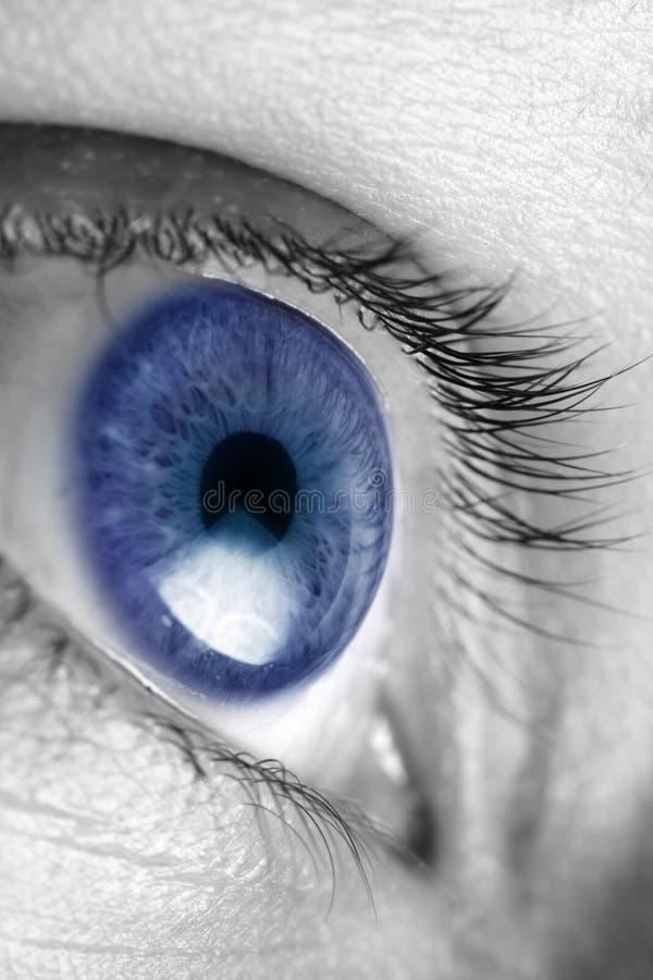蓝色明亮的眼睛 库存图片