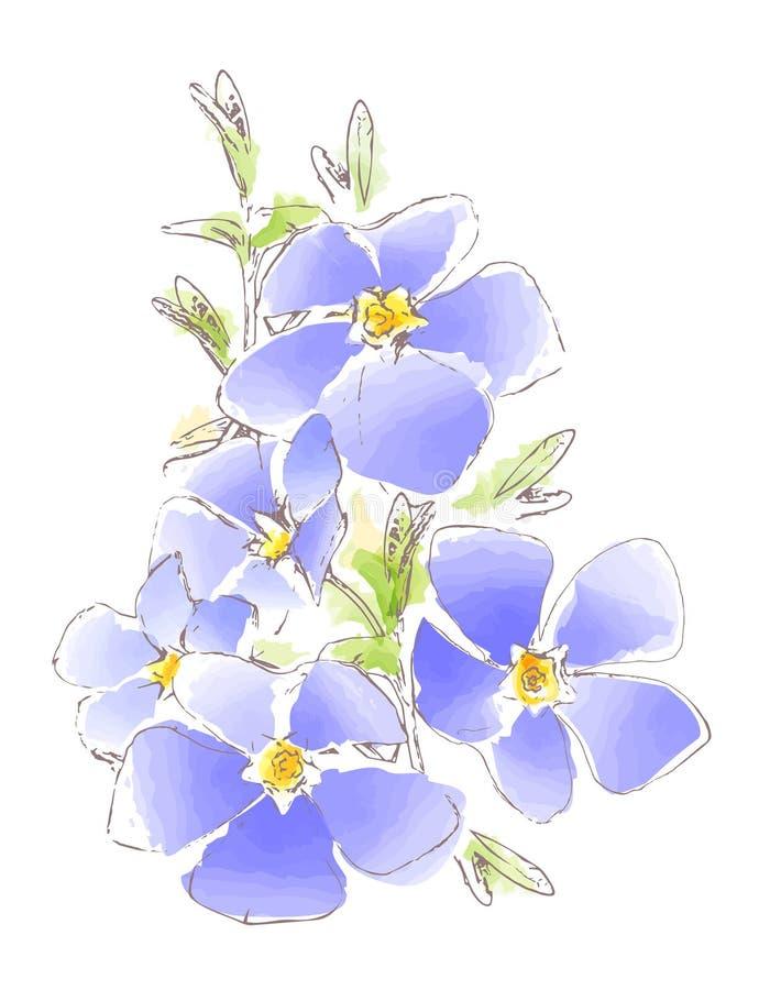 蓝色春天花的水彩图片,传染媒介 免版税库存图片