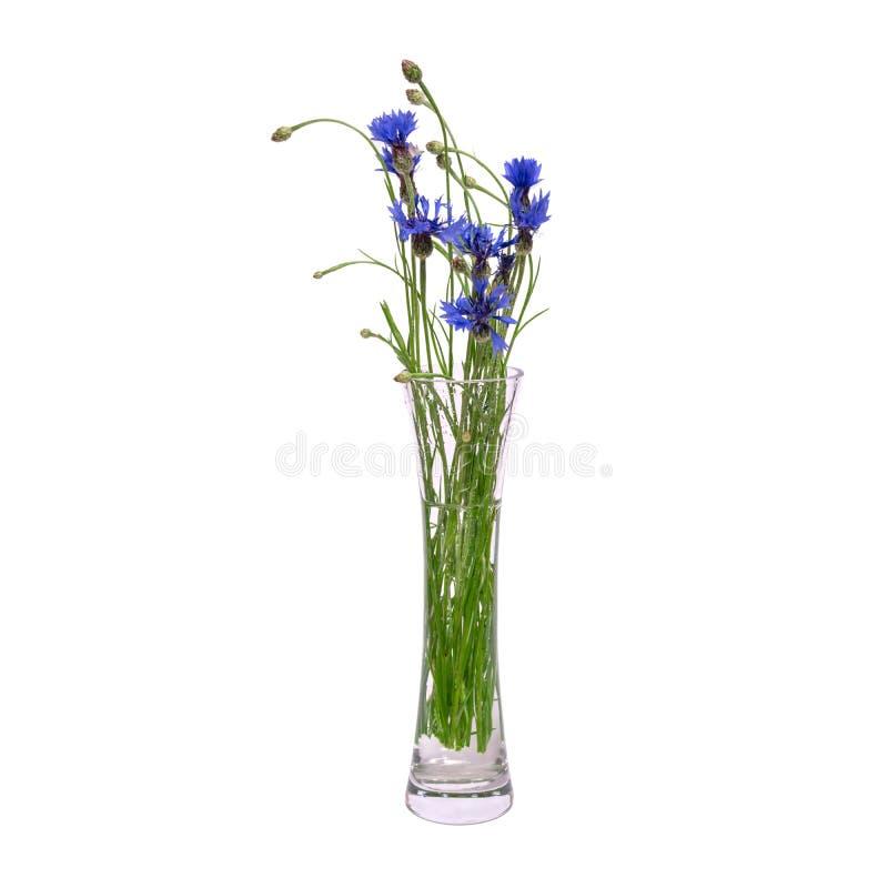 蓝色春天花花束在一个玻璃透明花瓶的在白色背景被隔绝 免版税库存照片