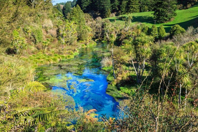蓝色春天, Te Waihou,新西兰,涌现在当地树立场  库存照片