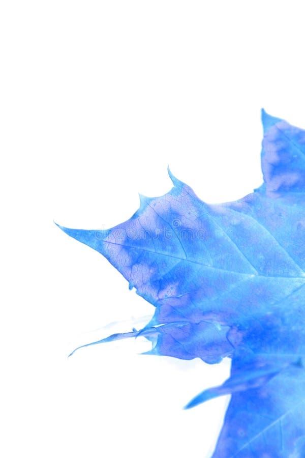 蓝色查出的叶子 库存例证