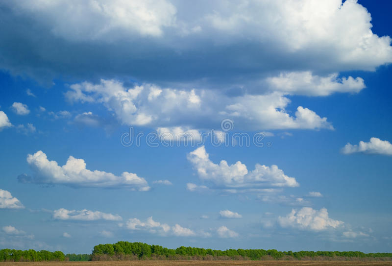 蓝色森林天空夏天 免版税库存照片