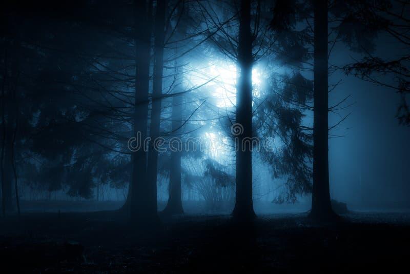 蓝色森林 免版税库存图片