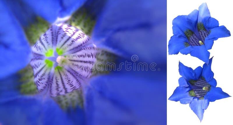 蓝色植物宏指令 图库摄影