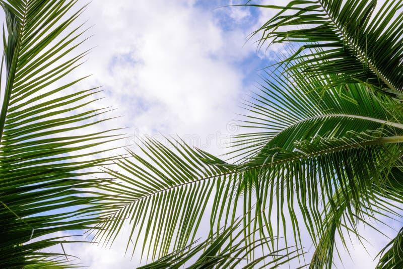 蓝色椰子天空结构树 在热带海岸的棕榈树 图库摄影