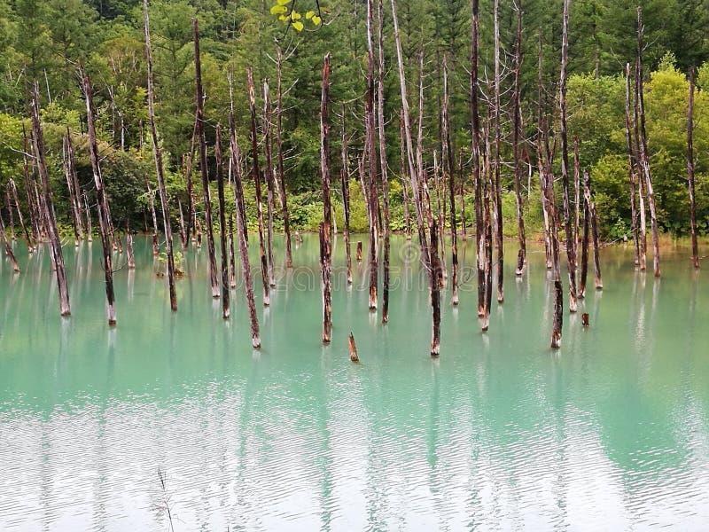 蓝色池塘在美瑛町镇,北海道,日本 库存图片