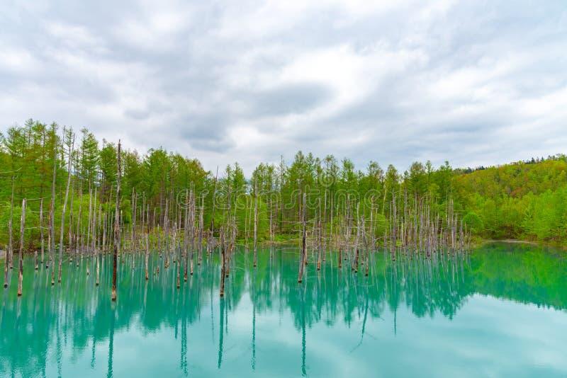 蓝色池塘(Aoiike)有树的反射的在夏天,在Shirogane Onsen附近位于美瑛町镇 免版税库存照片