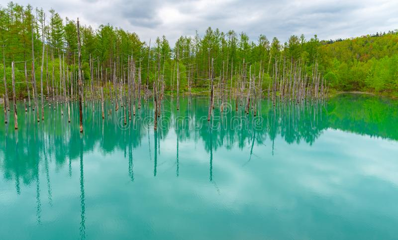 蓝色池塘(Aoiike)有树的反射的在夏天,在Shirogane Onsen附近位于美瑛町镇 免版税图库摄影