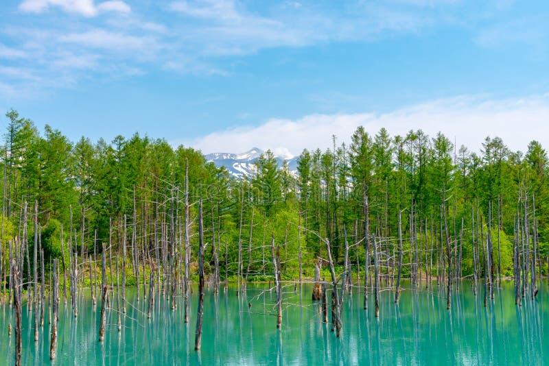 蓝色池塘(Aoiike)有树的反射的在夏天,在Shirogane Onsen附近位于美瑛町镇 图库摄影