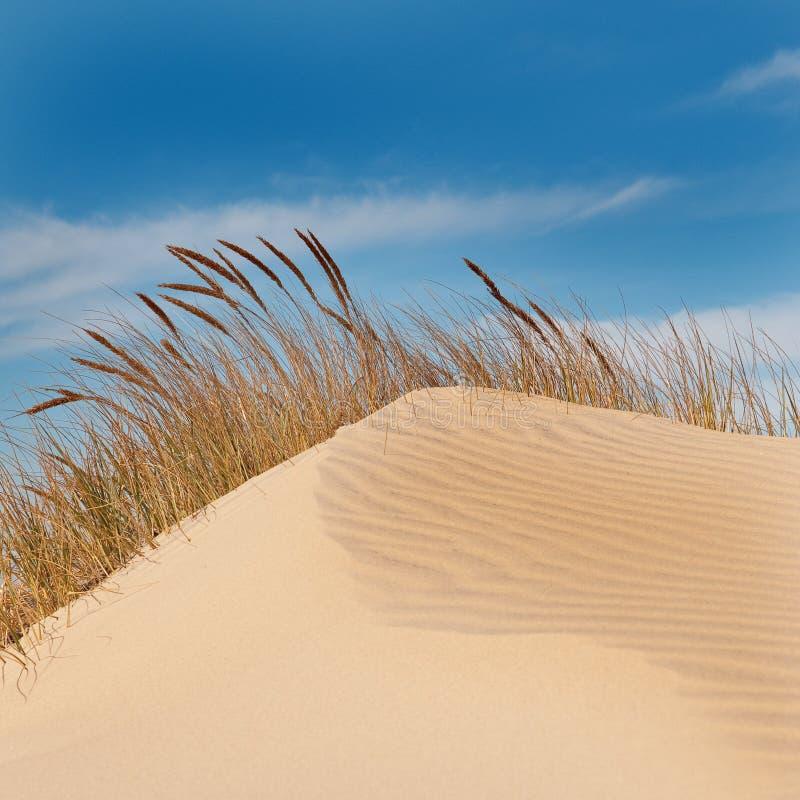 蓝色沙丘沙子天空 免版税图库摄影