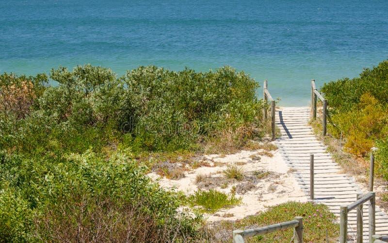 蓝色海洋海滩的木板走道与在旁边绿叶树在布赖顿le sands,悉尼,澳大利亚 免版税库存照片