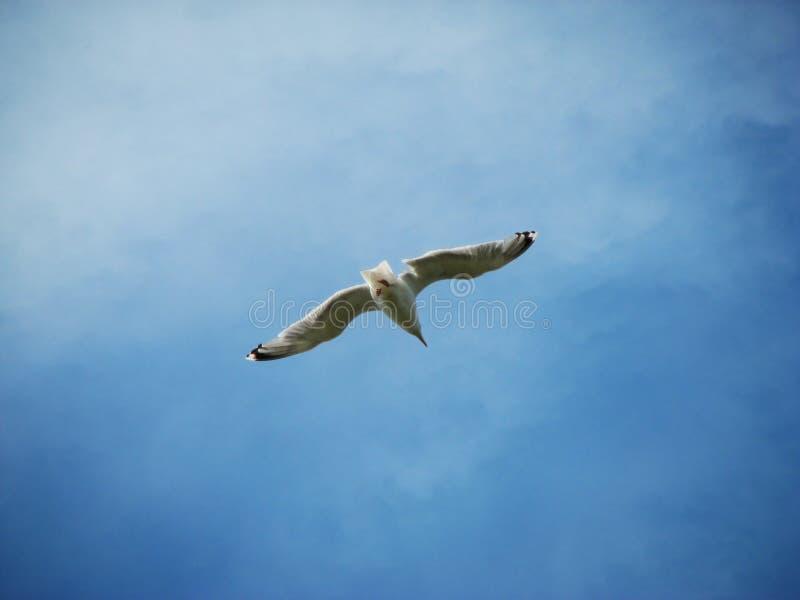 蓝色海鸥天空 免版税库存图片