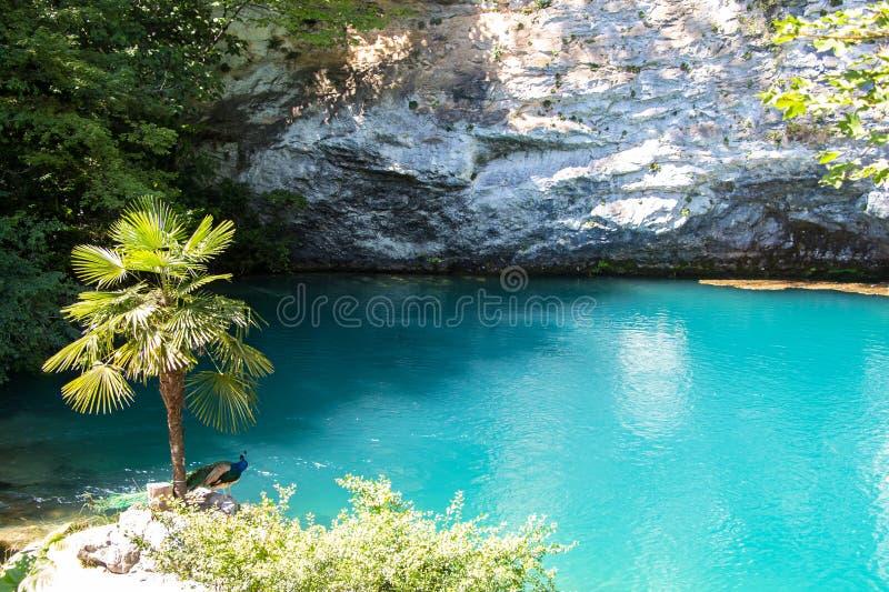 蓝色湖和棕榈树照片  库存照片