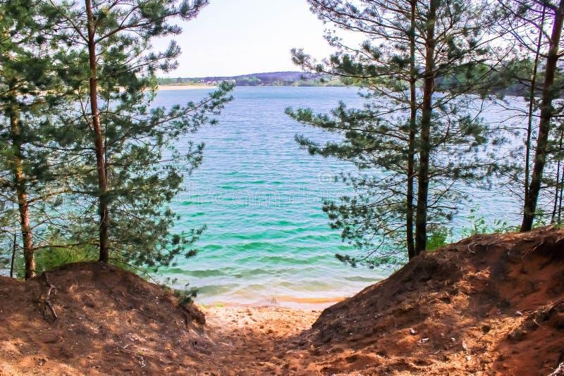蓝色湖树 免版税图库摄影