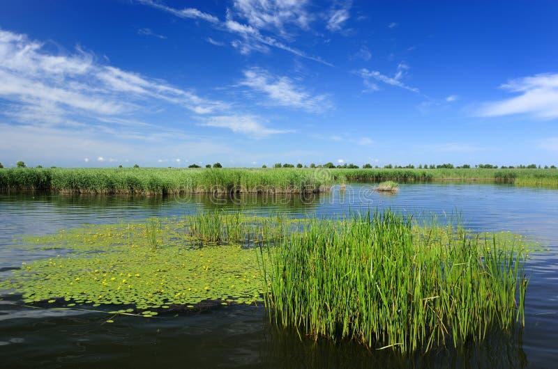 蓝色湖用茅草盖天空沼泽 库存照片