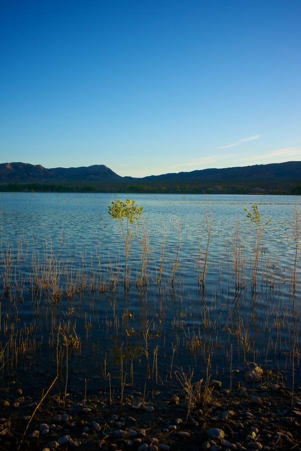 从蓝色湖的成长 库存照片