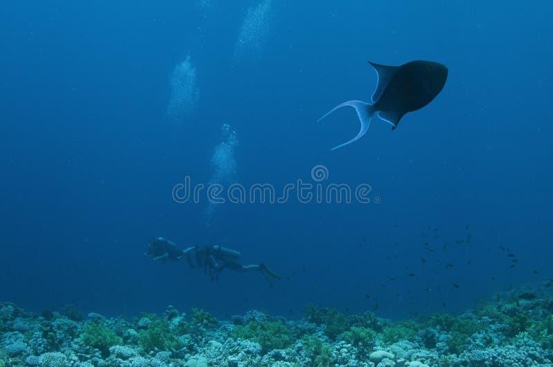 蓝色潜水员钓鱼触发器 免版税库存图片