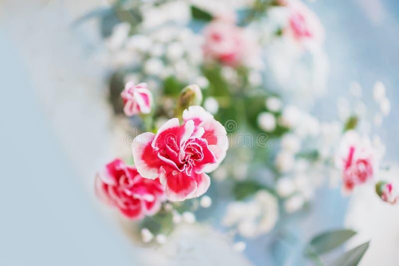 蓝色灰色柔和背景上的小红白色康乃馨花,复制空间 库存图片