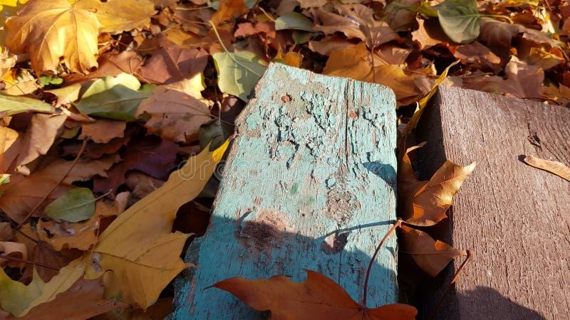 蓝色特写镜头绘了与秋叶地毯的困厄的木板条在地面 库存照片