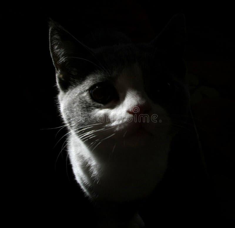 蓝色猫英语 免版税图库摄影