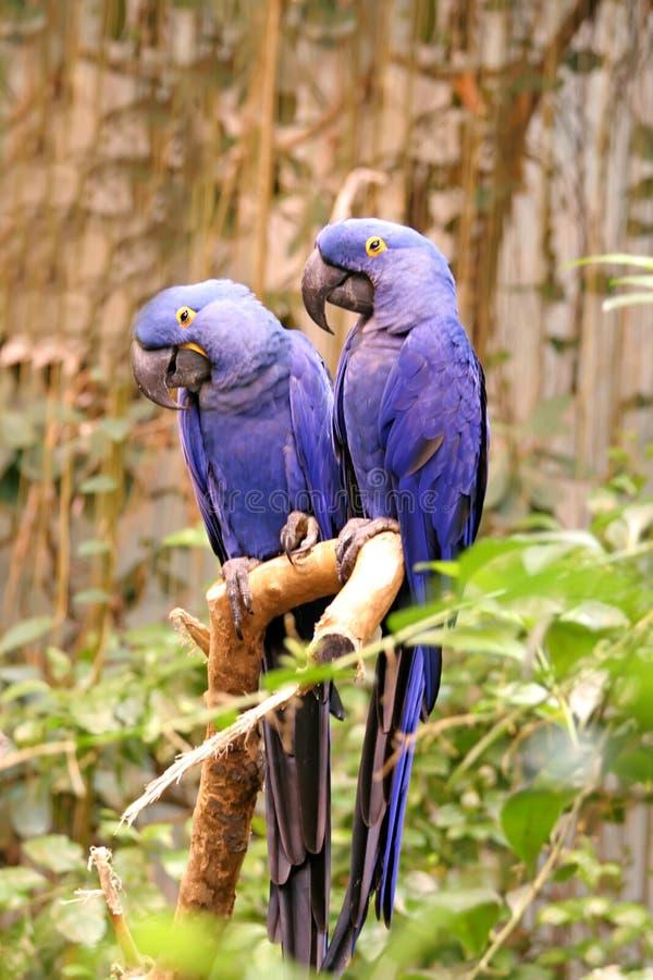 蓝色的鸟 库存图片