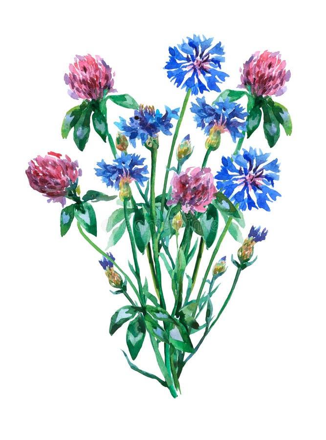 蓝色矢车菊和桃红色三叶草三叶草花束 库存例证