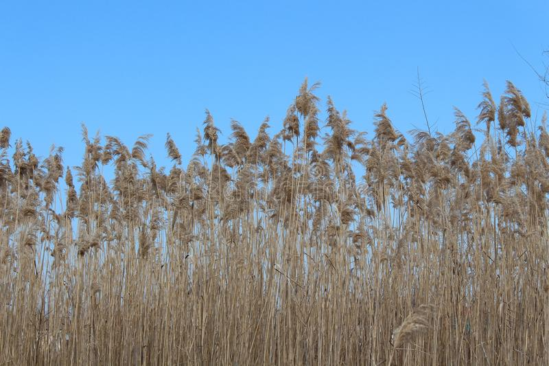 蓝色秋天天空 干燥工厂 风景 图库摄影
