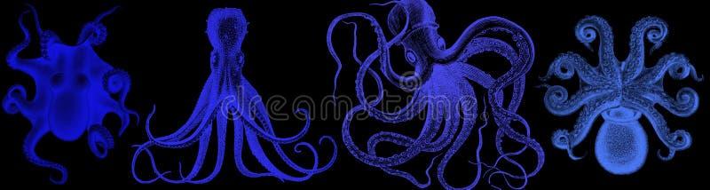蓝色章鱼背景 例证水彩手拉用章鱼 背景用章鱼 水彩 库存例证