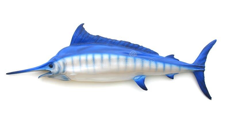 蓝色箭鱼 库存照片