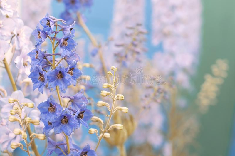 蓝色精美花在夏天射击了特写镜头 免版税图库摄影