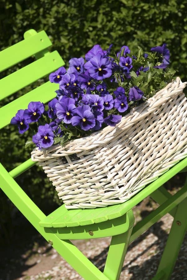 蓝色紫罗兰 免版税图库摄影