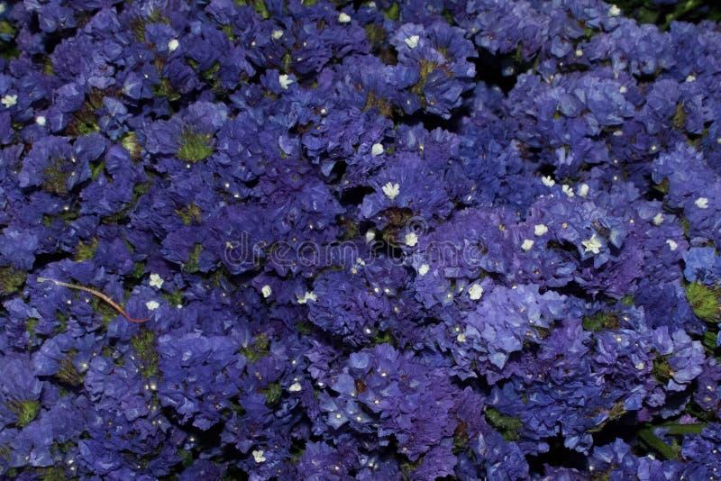 蓝色紫色草甸花 图库摄影