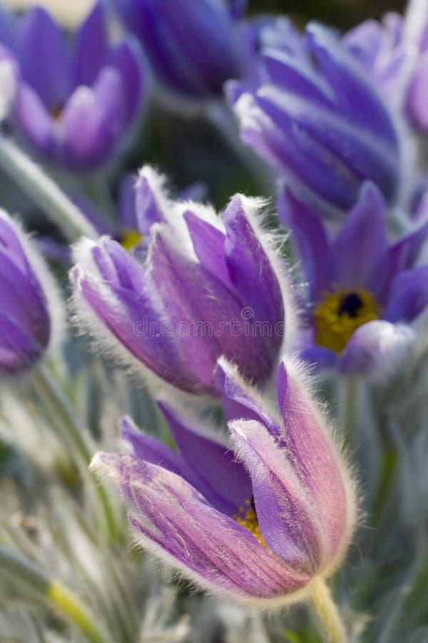 蓝色细致的花 库存照片